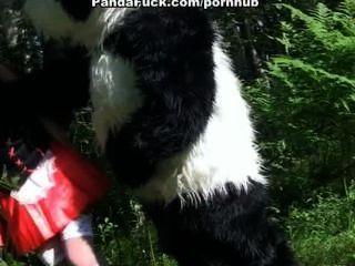 الرداء الأحمر سخيف مع الباندا في الخشب