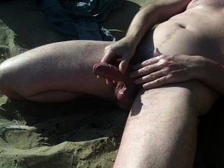 عرض كبير الديك الاسكتلندي على الشاطئ