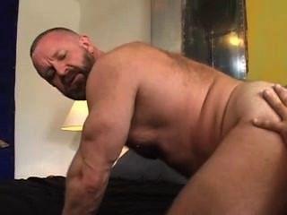 اثنين من الدببة العضلات