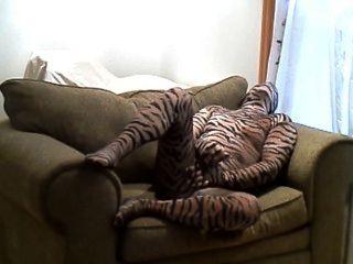 نمر من الصعب قرنية الهزات قبالة حين يرقد على كرسي كبير