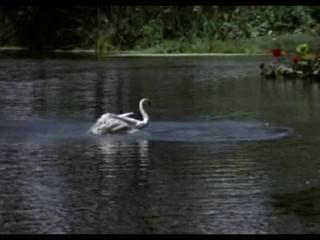 خورخي ريفيرو (المعروف أيضا باسم جورج الأنهار)، والسباحة آدم