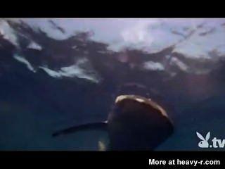 فتيات عاريات في قفص القرش